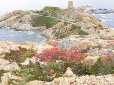 Korsika 14 494